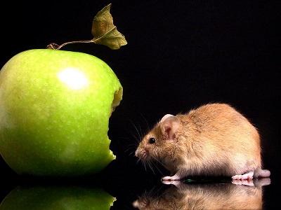 "Apple начала охоту на бренды, начинающиеся с ""i"""